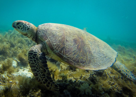 tortue nouvelle caledonie